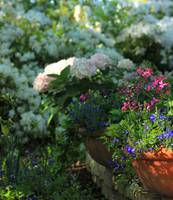 Spring Pots of Color IMG_5447