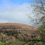 """Enchanted Rock IMG_5309"" by rayjacque"