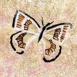 """Butterfly 1"" by Jami"