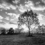 """backlit tree"" by hughwilliamson"