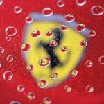 """Ferrari Drops"" by roadandtrackphotos"
