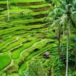 "Tegallalang, Bali" by EdmundLowe