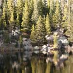 """""""Bear Lake Pines"""" by randomizedphotos"""
