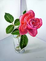 Pink Rose in the Glass