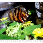 """Butterfly 2 Photograph"" by farrow"