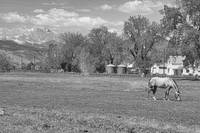 Scenic View Hygiene CO Boulder County BW