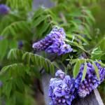 """""""Spring"""" by tsgentuso"""