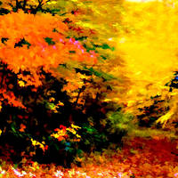 Autumn Abstract Colors