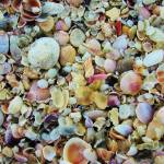 """Shells"" by steveondrusphotography"