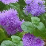 """""""purple flower fun"""" by annie59"""