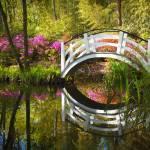 """Charleston SC Magnolia Plantation Spring Blooming"" by DAPhoto"
