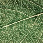 """""""Leaf"""" by OmairHaq"""