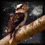 """Kookaburra"" by shady"