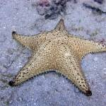 """Starfish"" by GregLipari"
