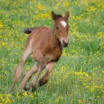 """""""Foal"""" by WildAboutNaturePhotography"""