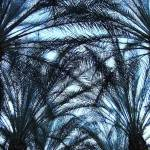 """Palm Canopy"" by steveondrusphotography"