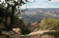 Cedar Ridge - Grand Canyon