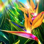 """Bird of Paradise"" by namanaloa"