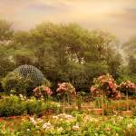 """""""The Rose Garden"""" by JessicaJenney"""