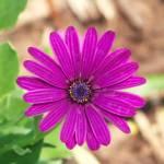 """""""flower"""" by cloudsinmycoffee"""