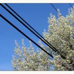 """Electric Utility of Flowering Tree"" by CuriousEye"