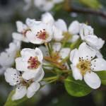 """Spring Has Arrived"" by RHMack"