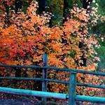 """Golden Bridge"" by maureenmarieltd"
