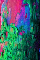 Sycamore Tree Trunk Abstract