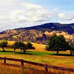 """Idyllic Pasture"" by maureenmarieltd"