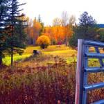 """""""The Meadow"""" by maureenmarieltd"""