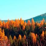 """""""Trees On Fire"""" by maureenmarieltd"""