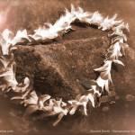 """Sacred Earth"" by namanaloa"