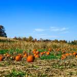 """""""Pumpkin Patch"""" by Ravenworksca"""