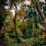 """Forest Trees HDR"" by InspiraImage"