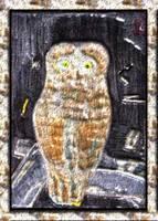 Owl Digital/Photomanipulation Contemporary