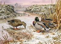 Mallards in a Quiet Corner by Carl Donner