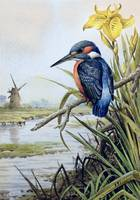 Kingfisher with Flag Iris and Windmill by Carl Don