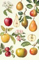 Apples and Pears by Elizabeth Rice