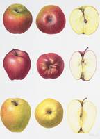 Six Apples by Margaret Ann Eden