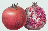 Pomegranate by Margaret Ann Eden