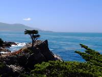 Lone Cypress Point