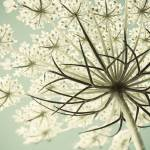 """Summer Snowflake"" by judystalus"