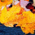 """Leaves on The Ground"" by maureenmarieltd"