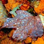 """""""Rainsoaked Leaves"""" by maureenmarieltd"""