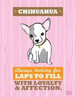 Chihuahua Pink/Orange