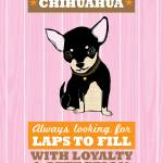 """Chihuahua2 Pink/Orange"" by Nose2Tales"