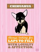 Chihuahua2 Pink/Orange