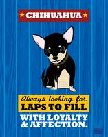 Chihuahua2 Royal/Red