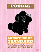 Poodle2 Pink/Orange