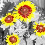 """""""flora"""" by cloudsinmycoffee"""